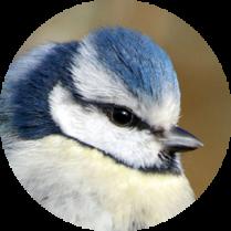 image oiseau.png (0.2MB)