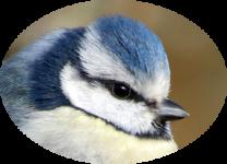 image oiseau3.png (0.1MB)